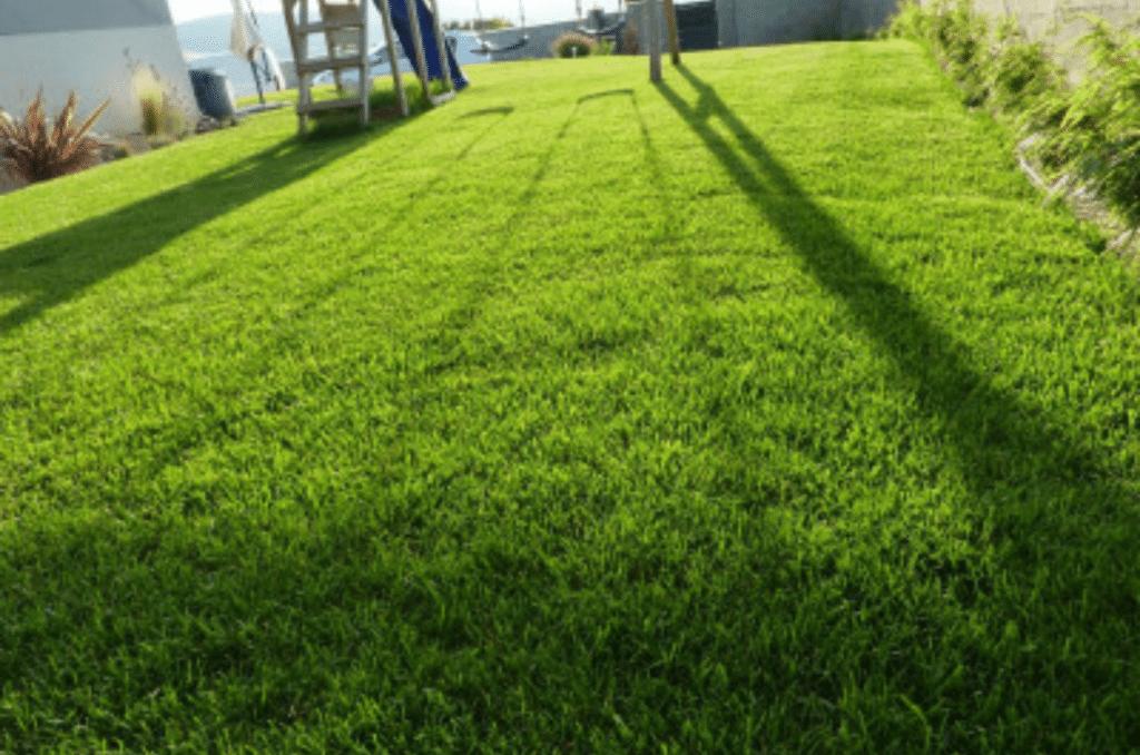 Comment fertiliser son gazon ?