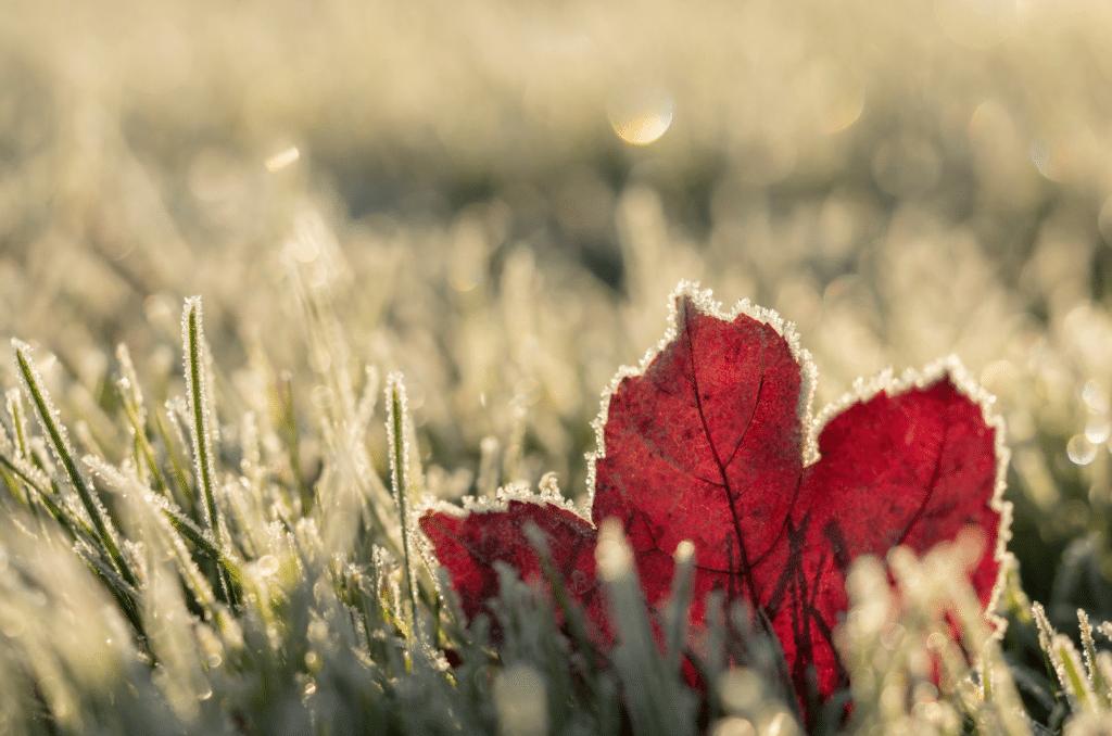 Entretien du gazon après l'hiver