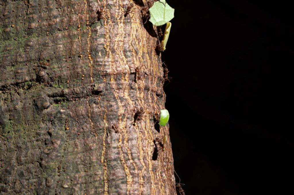Pelouse envahie de fourmis, quelles solutions ?