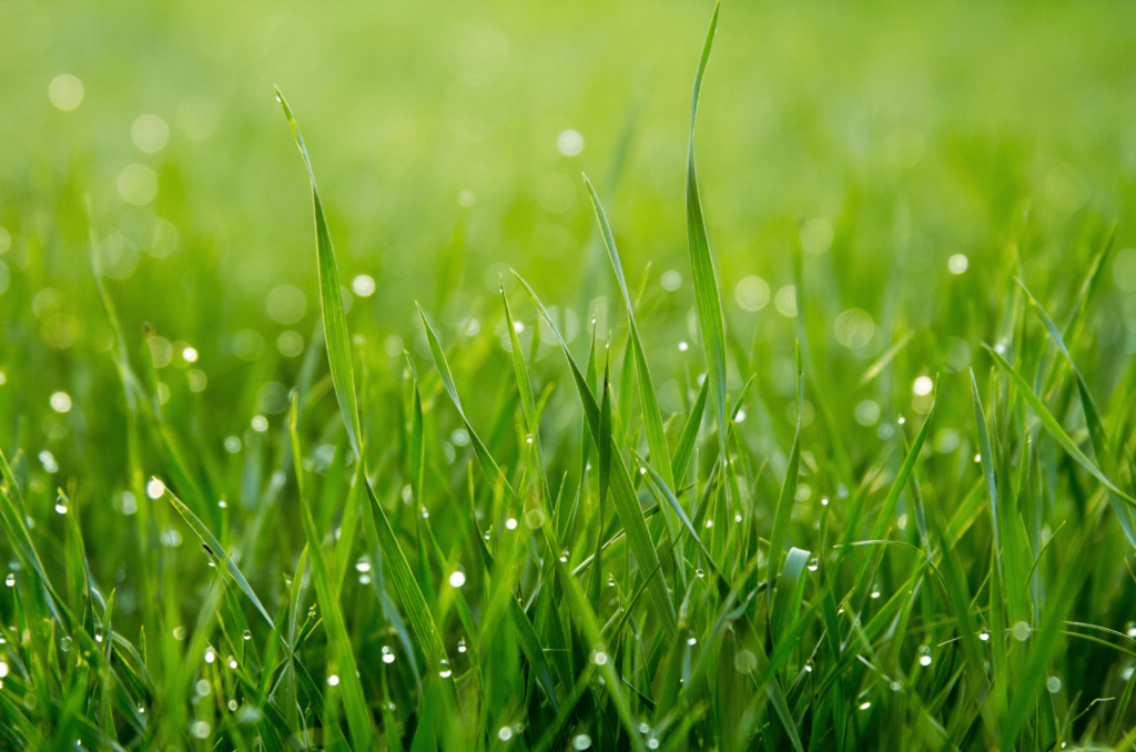 Y a-t-il une différence entre la pelouse et le gazon ?