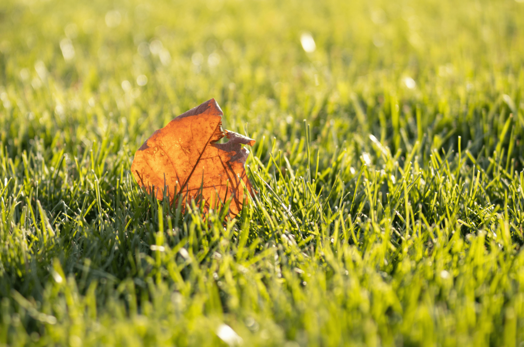Quand mettre l'engrais gazon en automne?