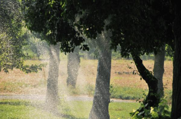 Quelle quantité d'eau pour la pelouse en été ?