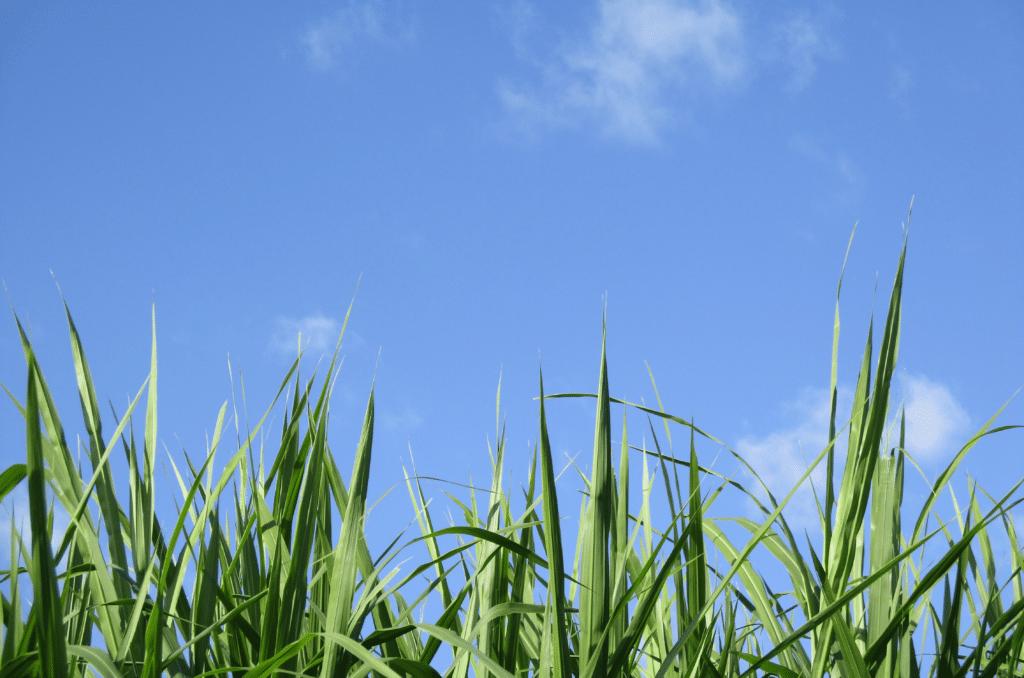 Quel engrais pour gazon l'été ?