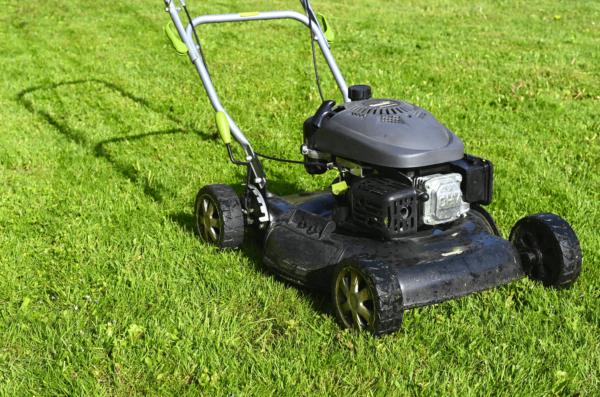 Faut-il tondre la pelouse en cas de sécheresse ?
