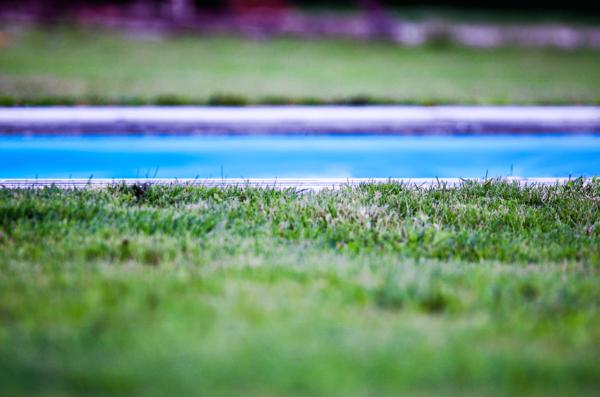 Gazon naturel autour de la piscine