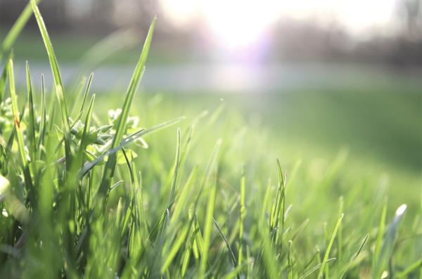 Semer de la pelouse