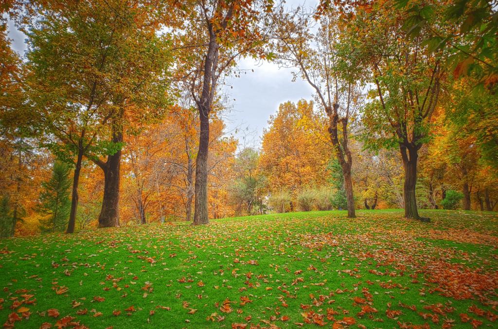 Gazon en automne