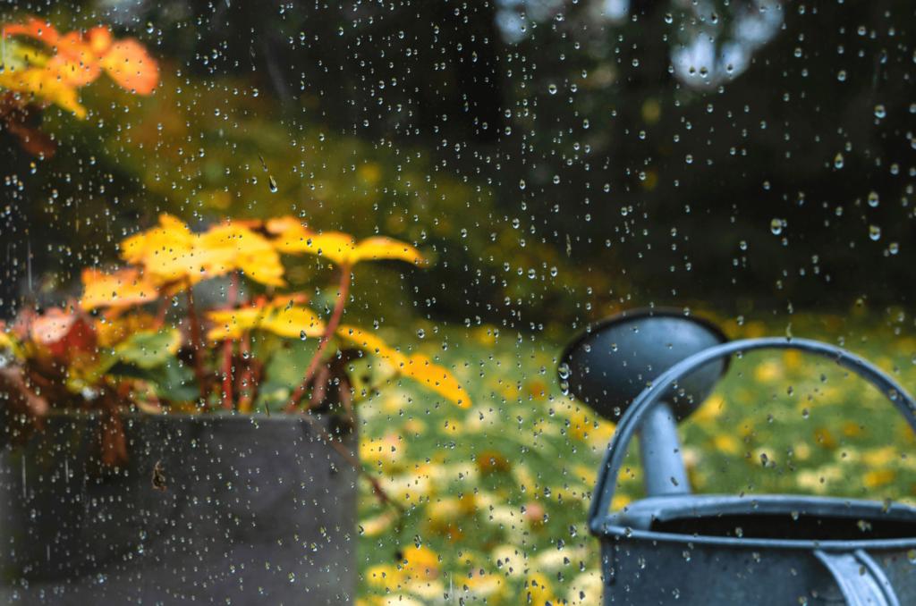 Planter du gazon en septembre
