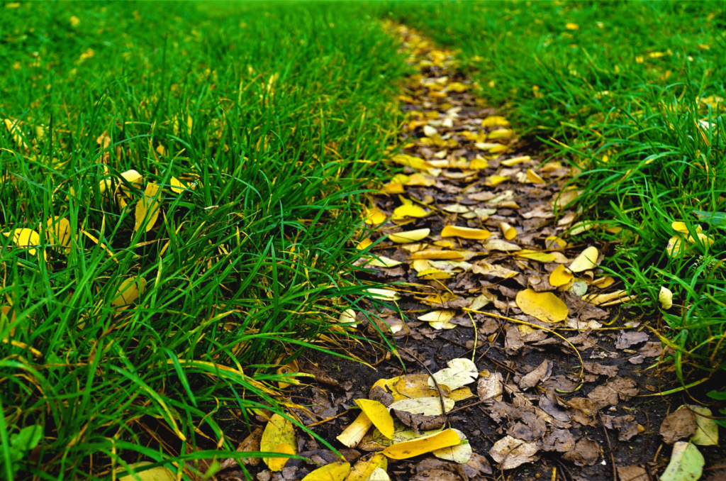 Scarifier sa pelouse en septembre