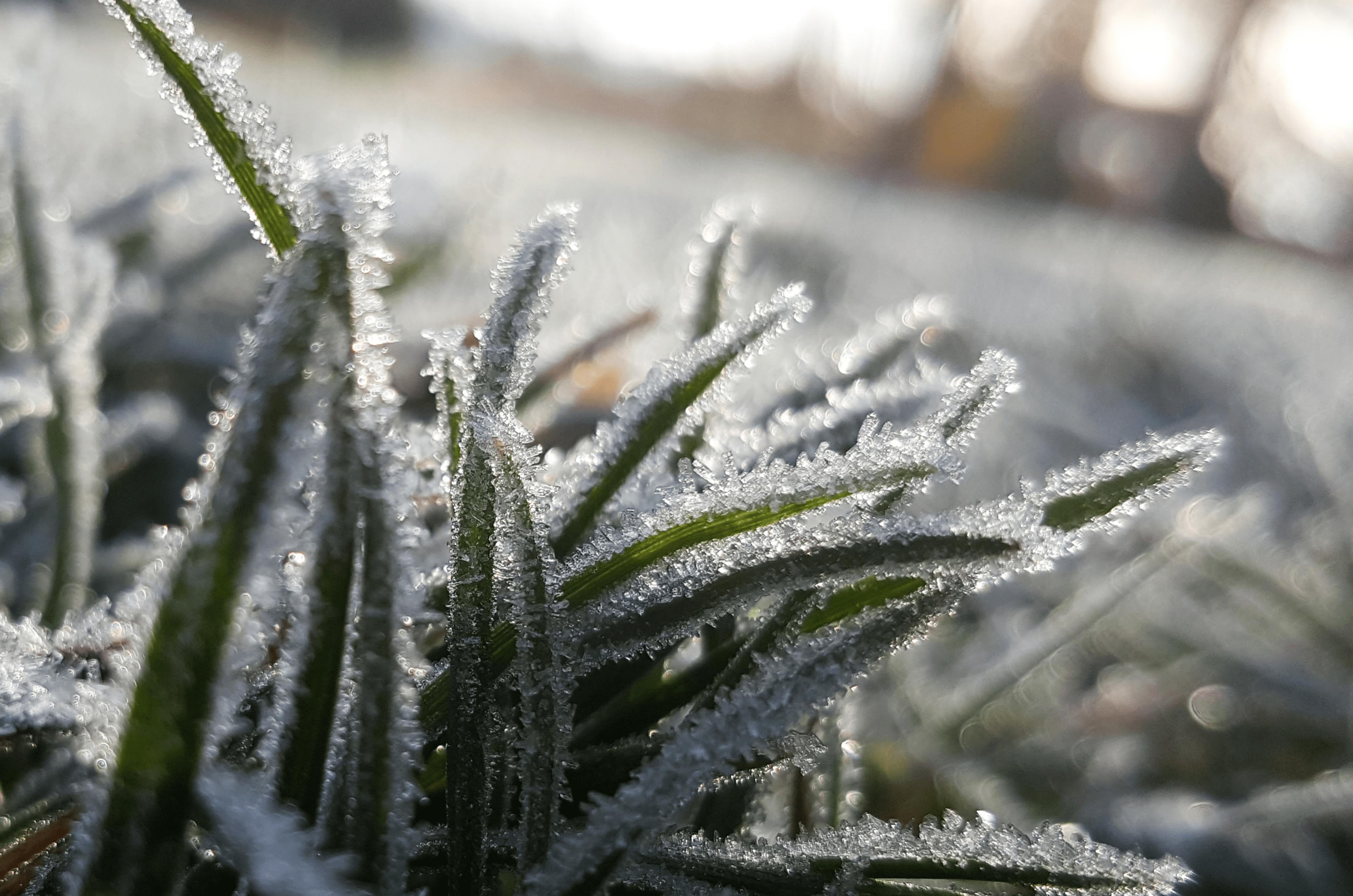 Quel entretien pour la pelouse avant l'hiver ?