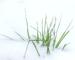 Le gazon en hiver