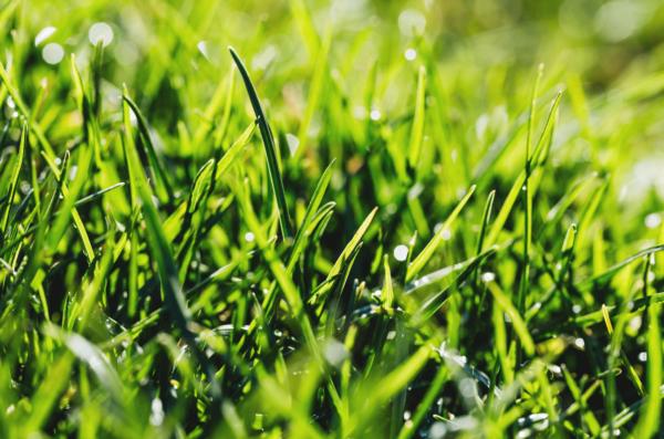 Quel engrais gazon pour l'été ?